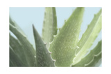 Soft Focus Succulent 1 Prints by Julie Greenwood