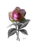Lotus Boranical Posters by Heather Johnston