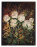 Hydrangeas and Ferns Prints by Maret Hensick