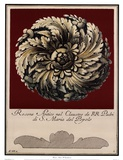 Rosone Antico IV Art