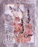 Love Letter Gladioli Art by Alma Lee