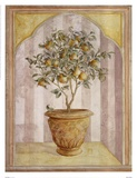 Lisa Canney Chesaux - Pear Niche Obrazy