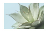 Soft Focus Succulent 4 Posters by Julie Greenwood