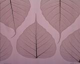 Sheer Leaves II Print