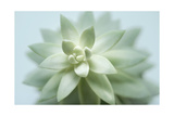 Soft Focus Succulent 2 Posters by Julie Greenwood