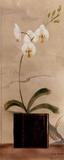 Asian Orchid II アート : ジェニファー・マルタ