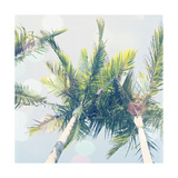 Sun Speckled Palm Trees Posters by Susannah Tucker