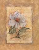 Grandi Flora Prints by Susan Winget