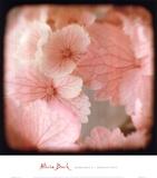 Hydrangea 2 Print by Alicia Bock