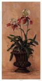 Orchid Revival ll Stampe di Barbara Mock