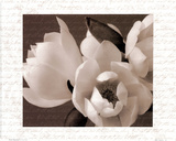 Winter Magnolia I Prints by Tony Stuart