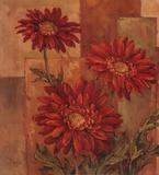 Daisies Terra Cotta Stampe di Barbara Mock
