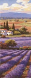 Fields Of Lavender II Poster by Sung Kim