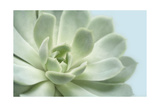 Soft Focus Succulent 3 Prints by Julie Greenwood
