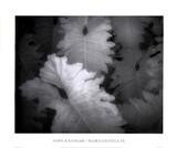 Flora Exotica IX Prints by John Kasinger