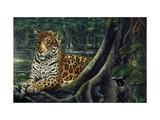 Jaguar by the River Prints by Harro Maass