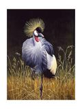 Crowned Crane Prints by Harro Maass