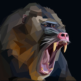 Angry Ape Monkey Mandrill Baboon Screaming in Rage on Dark Background Print by  mid92