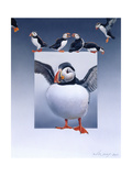 Puffins Posters by Harro Maass