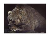 Bear Posters by Harro Maass