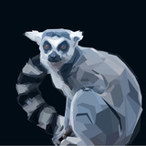 Ring Tailed Grey Lemur Creeping in Shadows on Dark Background Posters by  mid92