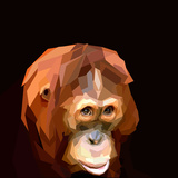 Sad Cute Orangutan Face on Dark Background Prints by  mid92