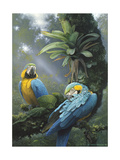 Blue and Yellow Macaws Prints by Harro Maass