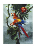 Red and Yellow Macaws Prints by Harro Maass