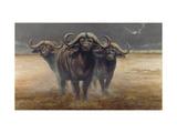 Cape Buffalos Prints by Harro Maass