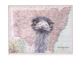 Emu Art by Jane Wilson