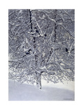 Snow Tree with Magpies Posters by Harro Maass