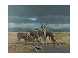 Greater Kudus Prints by Harro Maass
