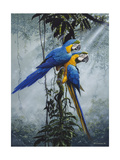 Blue and Yellow Macaws 2 Posters by Harro Maass