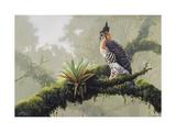 Ornate Hawk - Eagle Poster by Harro Maass