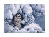 Long-Eared Owl Art by Harro Maass