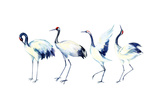 Watercolor Asian Crane Bird Set Print by  tanycya