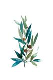 Olive Branch I Prints by Asia Jensen