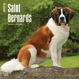 Saint Bernards - 2017 Calendar Calendars