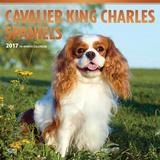 Cavalier King Charles Spaniels - 2017 Calendar Kalendarze
