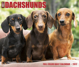 Just Dachshunds - 2017 Boxed Calendar Kalendere