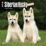 Siberian Husky Puppies - 2017 Calendar Calendars