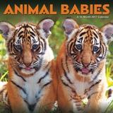 Animal Babies - 2017 Calendar Calendars