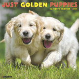 Just Golden Puppies - 2017 Calendar Calendriers