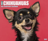 Just Chihuahuas - 2017 Boxed Calendar Calendars