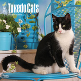 Tuxedo Cats - 2017 Calendar Kalendáře
