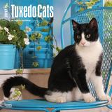 Tuxedo Cats - 2017 Calendar Kalenders