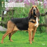 Bloodhounds - 2017 Calendar Calendriers