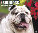 Just Bulldogs - 2017 Boxed Calendar Kalendarze