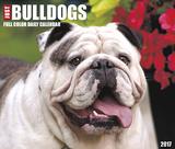 Just Bulldogs - 2017 Boxed Calendar - Takvimler