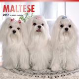 Maltese - 2017 Calendar Calendriers